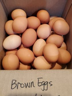 Fresh Organic Brown Eggs Qty:32 For $10 for Sale in San Lorenzo,  CA