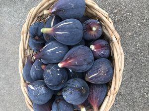 Organic Figs! Higos orgánicos for Sale in Rosemead, CA
