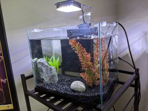 Aquatop Pisces 5gal tank for Sale in Portland, OR