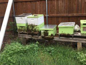 🐝 Bees 🐝 for Sale in Dallas, TX