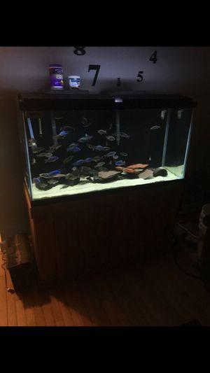 Complete 90 gallon for Sale in Meriden, CT