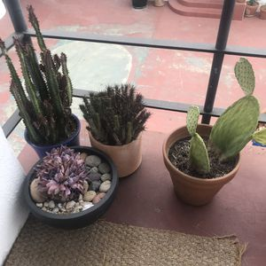 Plants Succulents for Sale in Los Angeles, CA