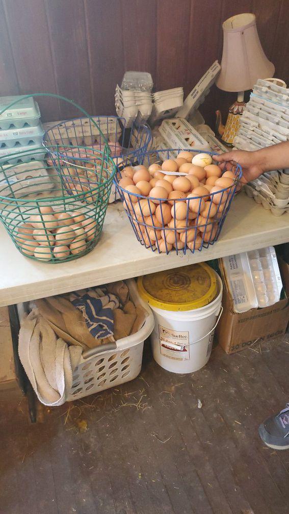 Huevos Criollos Frescos (Fresh eggs)