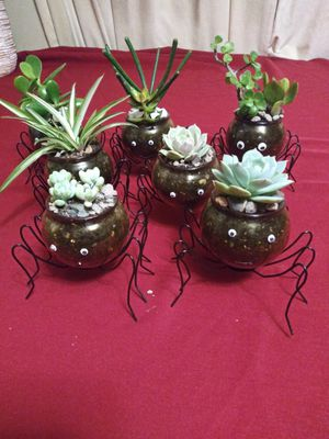 Succulents. En arañitas. Pequeñitas$5EACH for Sale in Bell, CA
