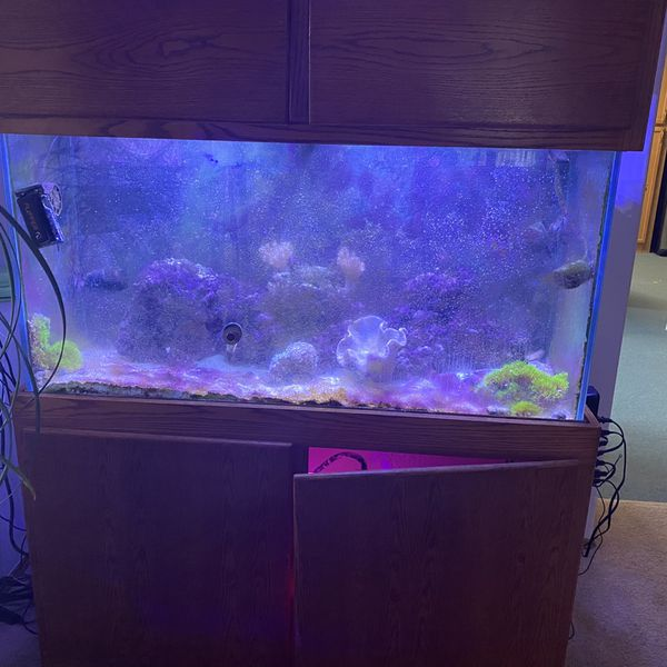 100 gallon tank, I'll fish and see enemies and live plants