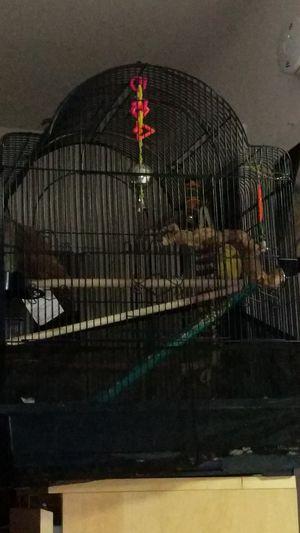 Bird Cage for Sale in Glen Burnie, MD