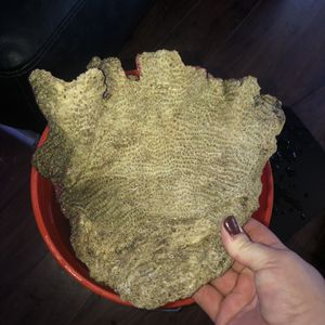 Live Rock For Salt Water Fish Tank for Sale in Renton, WA