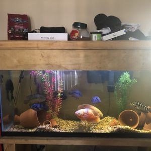 Fish Tank for Sale in Fountain Valley, CA