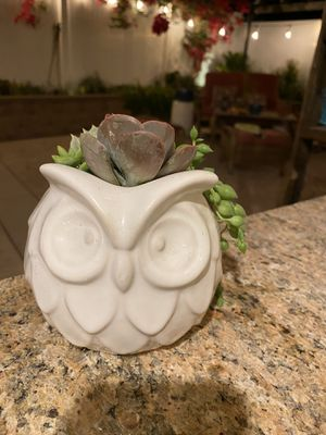 Succulent white owl 🦉 pot for Sale in Fontana, CA