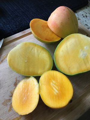 Mango for Sale in Clearwater, FL