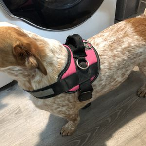 Dog Harness for Sale in Joint Base Lewis-McChord, WA