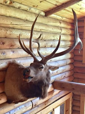 Animal mounts for Sale in Ramsey, MN