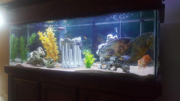120 gallon fish aquarium