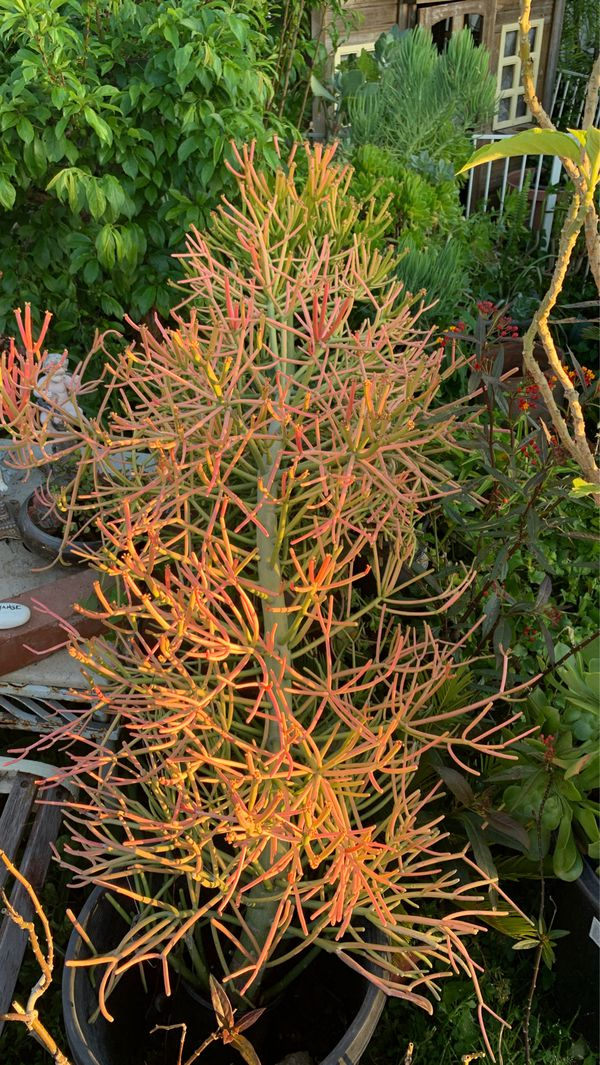 Assorted landscaping plants for yard or patio. Front yard social distance friendly pick up in Orange.