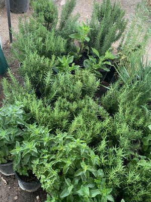Rosemary's, mints, oregano, basil, lemon grass,rue for Sale in Fresno, CA