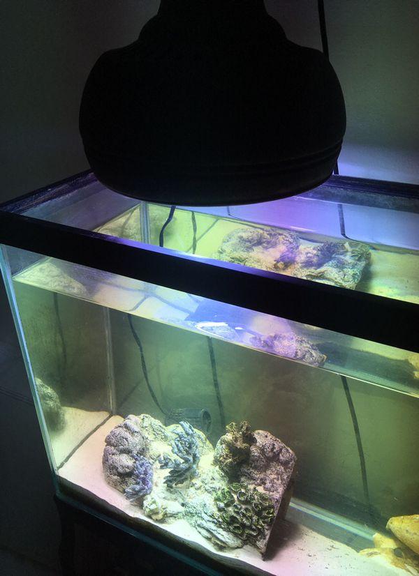 Aquarium 50 gal