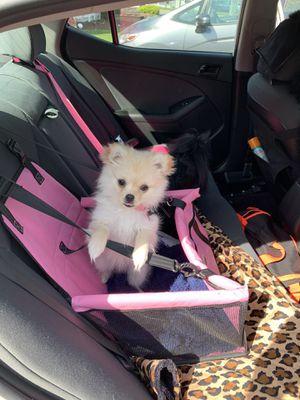 Car seat for Sale in Olympia, WA