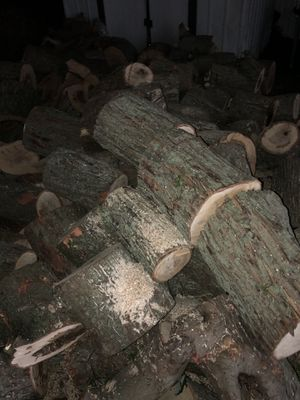 Free firewood for Sale in Long Branch, NJ