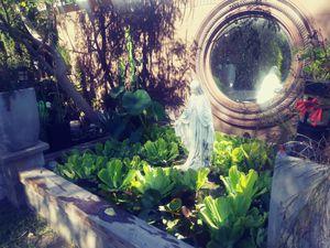 Water Pond Lettuce for Sale in Garden Grove, CA