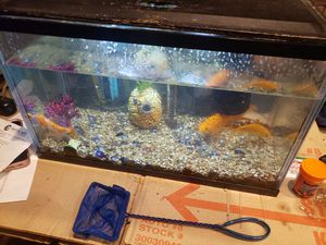 10 gal fish tank with fish for Sale in Pasco, WA