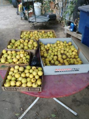 Guayavas fruit for Sale in Sanger, CA
