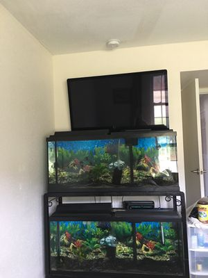 Two 55 gal fish tanks with iron stand for Sale in Saint Petersburg, FL