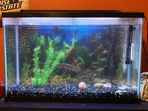 50 gallon fish tank. Perfect condition. 400 OBO for Sale in Meridian, ID