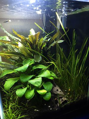 20 Gallon planted fish tank non co2 injected for Sale in Tacoma, WA
