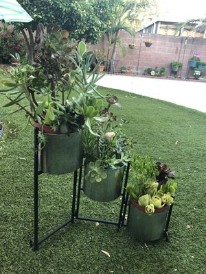 Very pretty succulent arrangements with metal stand and pots for Sale in Los Angeles, CA