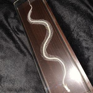 Snake Skeleton for Sale in Farmingdale, NY