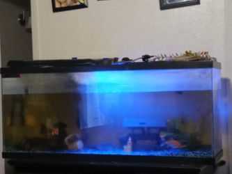 Fish Tank 100 Gallon Fresh Water Comes With Heater Lights And Filter for Sale in Fresno,  CA
