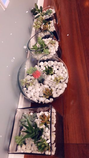 Succulent plants for Sale in Everett, MA