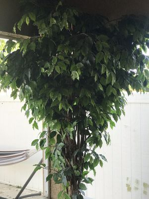 Plant (fake) for Sale in Riverview, FL