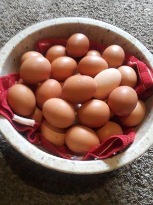 Farm Fresh free range organic chicken eggs for Sale in Land O Lakes, FL