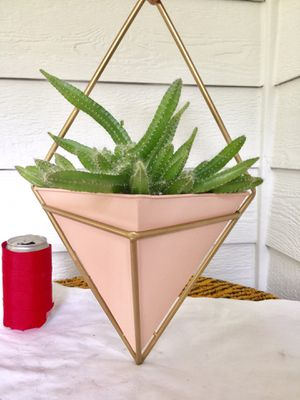 Dog Tail Cactus Plants in Diamond Shape Wall Hanging Metal Planter Pot- Real Indoor House Plant for Sale in Auburn, WA