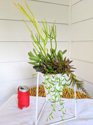 Succulent Plants in Metal Planter Pot with Stand - Real Indoor House Plant for Sale in Auburn, WA