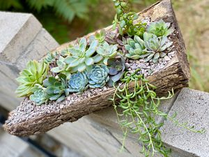 Wood Succulents Arrangement 💚🌱 for Sale in Los Angeles, CA
