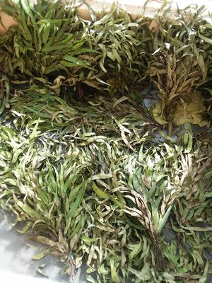Dry Bunches of Eucalyptus for Sale in Garden Grove, CA