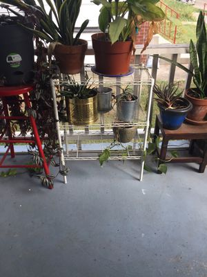 Healthy houseplants for Sale in Columbus, OH