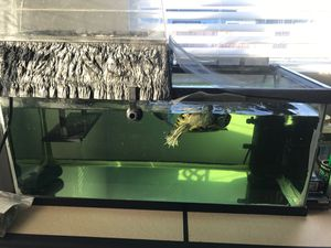 Red Eared Slider Aquatic Turtle with Tank and Lights for Sale in Oceanside, CA