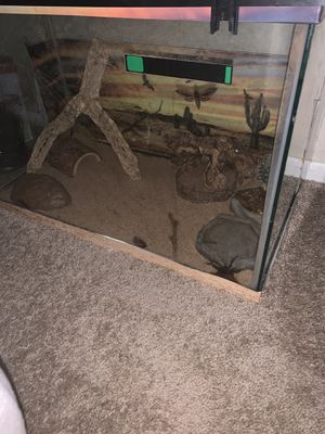 20 gallon tank with beginner reptile supplies for Sale in MAYFIELD VILLAGE, OH