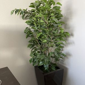 Artificial House Plant for Sale in Garden Grove, CA