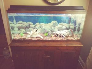 Fish Tank 60 Gallons $100 everything comes with it for Sale in University City, MO