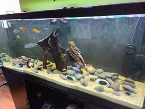 120gal Aquarium with EVERYTHING!! for Sale in Sterling Heights, MI