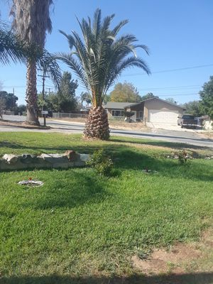 Tree and palm for Sale in Corona, CA