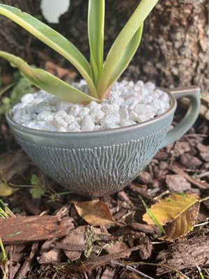 Succulent Teacup Planter - Tree Bark Green & Rose Gold Planter - Handpainted - Upcycled - Repurposed - Garden Gift - Free Starter Succulent for Sale in Pisgah Forest, NC