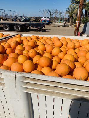 Naranja for Sale in Fresno, CA