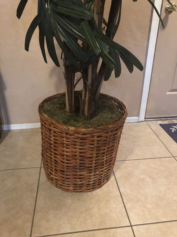 Beautiful 8 foot plant