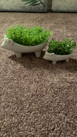 Fake plant hedge hogs for Sale in Peoria, AZ