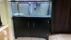 Complete Aquarium for Sale in Auburndale, FL